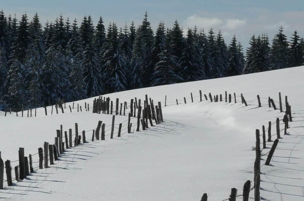 aubrac unter dem Schnee