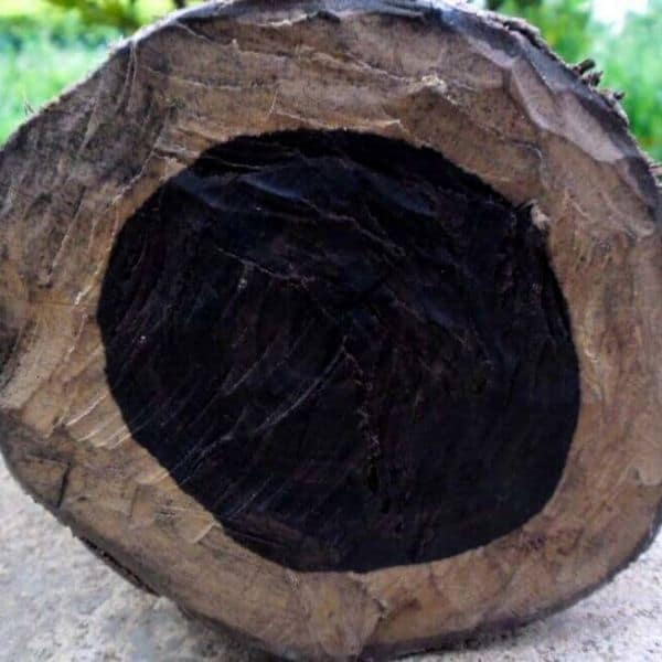 ebenholzbaum
