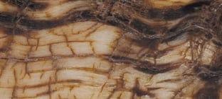 laguiole griff aus widder-kruste